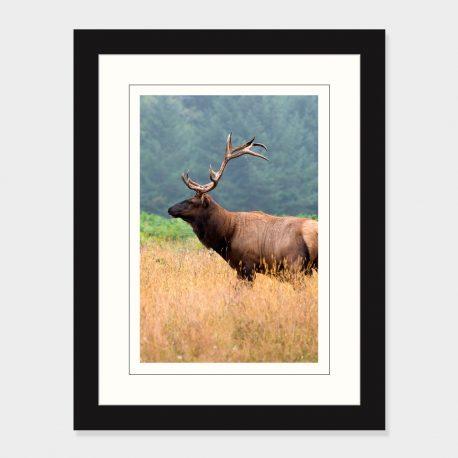 California-Elk-Framed