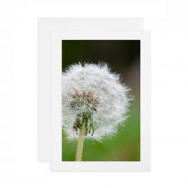 Dandelion – Card