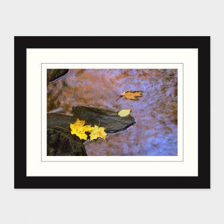Fallen-Leaves-in-Stream-Framed