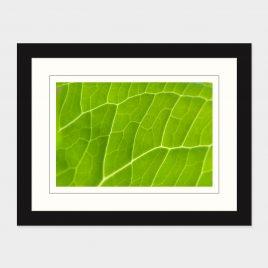 Leaf Details – Print
