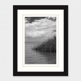 Grasses in Lake Erie – Print
