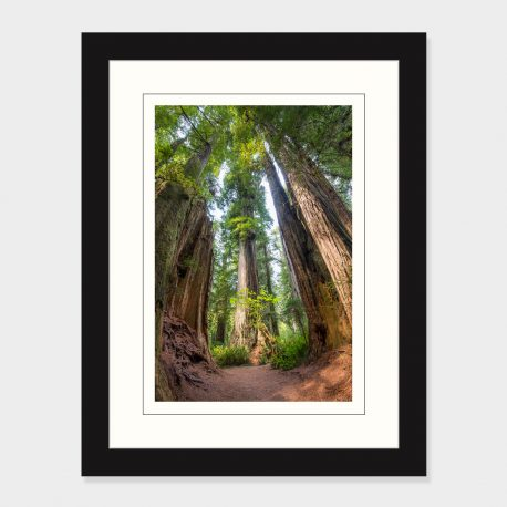Redwood-Trees-Framed