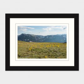 Rocky Mt NP Wildflowers – Print