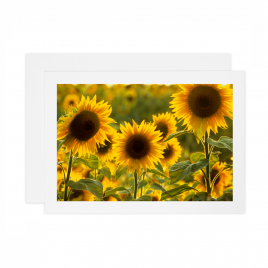 Sunflowers 2 – Card
