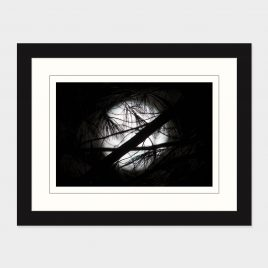 Super Moon through Branches – Print