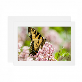 Tiger Swallowtail Butterfly – Card