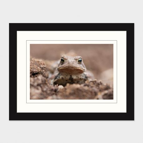 Toad-I-Framed