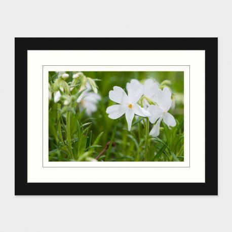 White-Flower-Framed