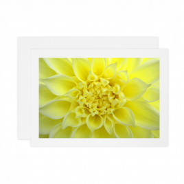 Yellow Dahlia – Card