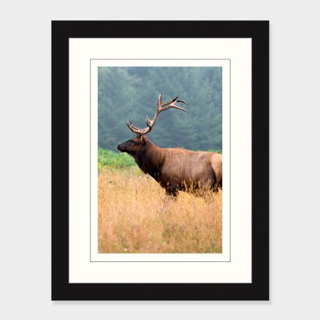 California-Elk-Framed