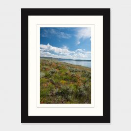 Wildflowers along the lake's edge – Print