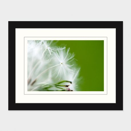 Dandelion-III-Framed