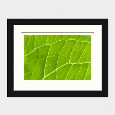 Leaf-Detail-Framed
