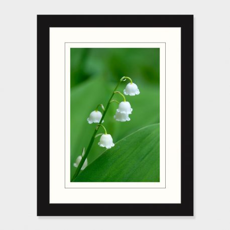 Lily-of-the-Valley-Framed