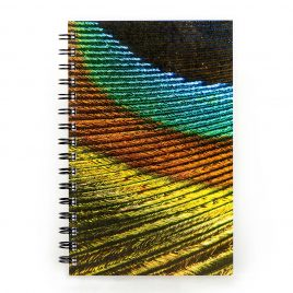 Peacock Feather – Notebook