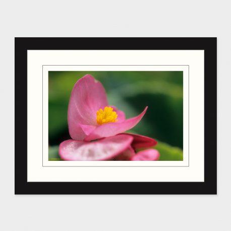 Pink-Flower-Framed