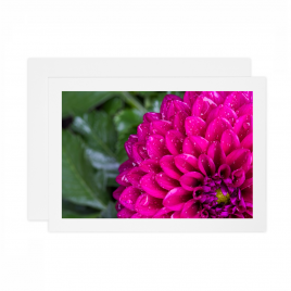 Purple Dahlia – Card