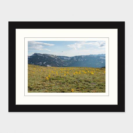 Rocky-Mountain-Flowers-Framed