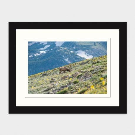 Rocky-Mt-Elk-Framed