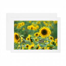 Sunflowers – Card