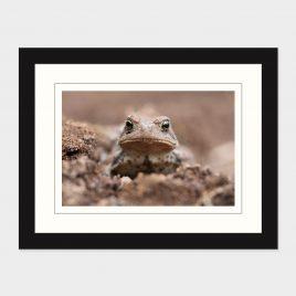 Toad II – Print