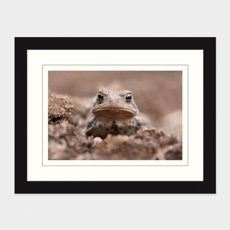 Toad-I-Framed