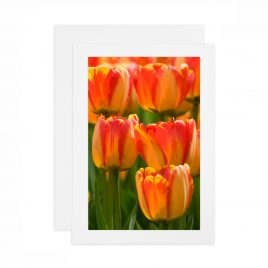 Tulips – Card