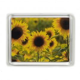 Sunflowers – Magnet